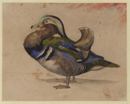 Delacroix-a-mandarin-drake