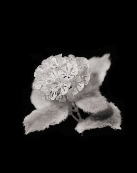 hideki tokushige honebana bone flower black and white