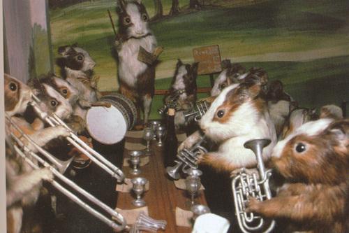 walterpotter-guineapigband
